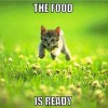 The Food is ready