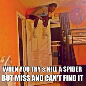 When you miss hitting a spider