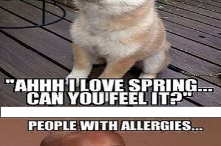 Funny Quotes About Allergies: Funny Pictures, Quotes, Memes, Funny