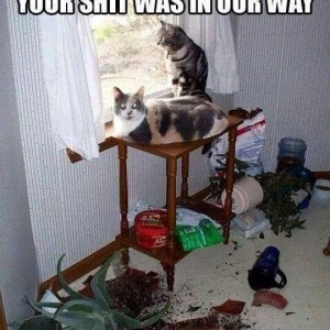 Cats taking command