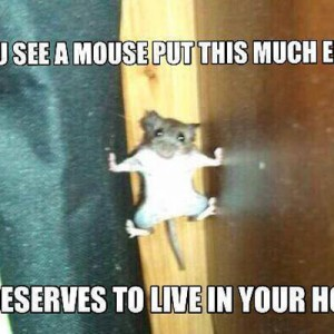 Mouse put this much effort