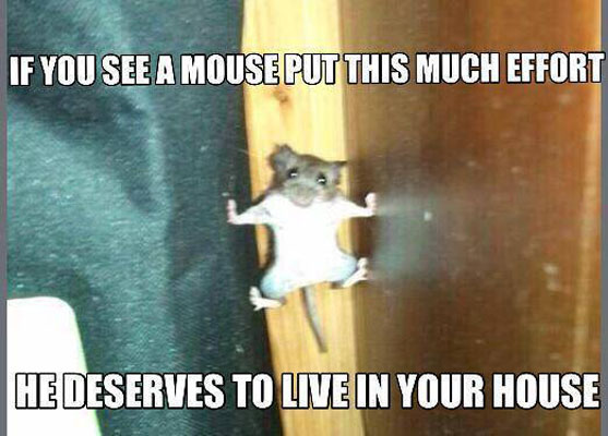 Cat And Mouse Quotes: Funny Pictures, Quotes, Memes