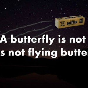 The more you know about Butterflies