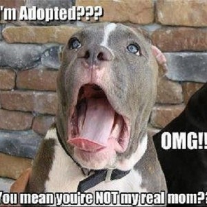 Adoption Meme