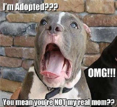Adoption Meme adoption meme funny pictures, quotes, memes, funny images, funny