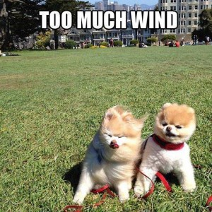 Ah It's a Windy Day