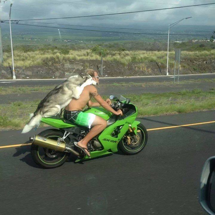 bike riders without helmet funny pictures quotes memes funny