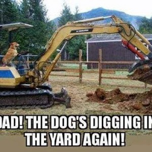 Dog's Digging in again