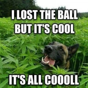 Drug Dog Meme