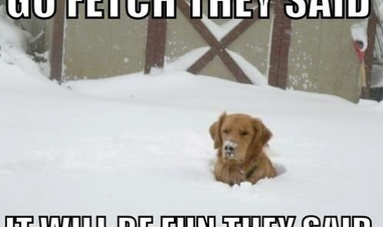 Fetching Ball in Snow