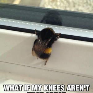 Funny Bee