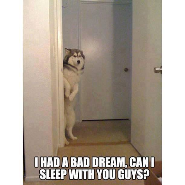 What Was the Funniest Dream You've Ever Had?