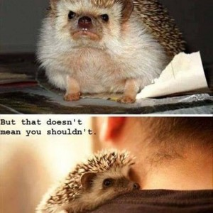 Hug a Hedgehog