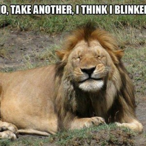 Lion King Blinked