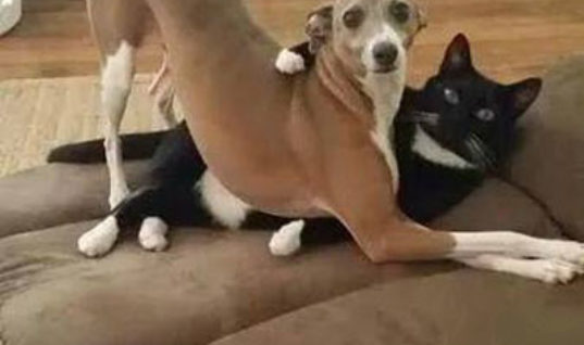 When the dog and cat were caught