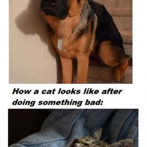 Dog Vs Cat Meme