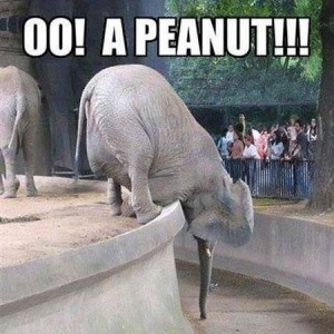 Elephants be like