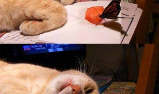 Oh Look a Butterfly