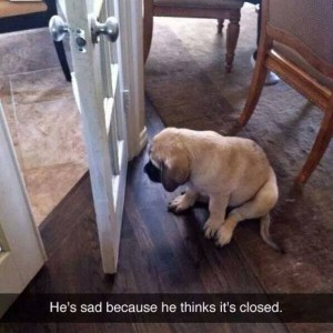 This dog is sad