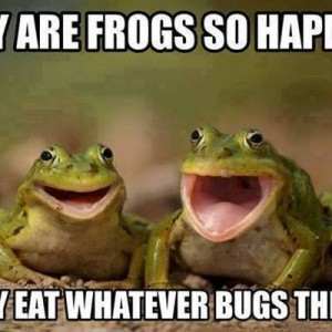 Why are frogs so happy