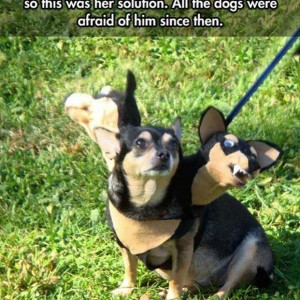 All Dogs will be afraid of this pet dog