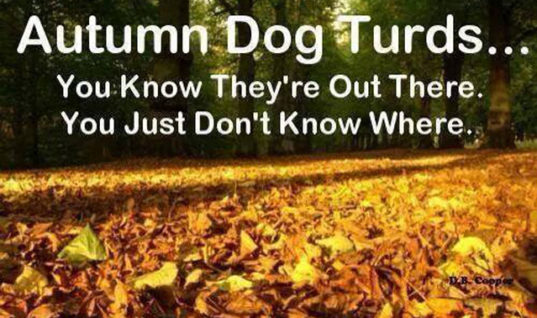 Autumn Dog Turds