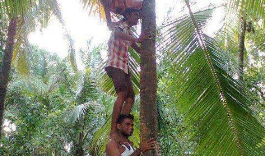Climbing Tree is easy