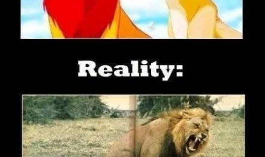 Expectation from Lion King