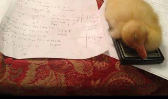 Nice Excuse for not doing Math