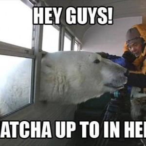 Polar Bear says Hi
