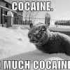This cat is stoned..