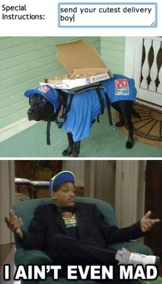 When Dogs Deliver Pizza Funny Pictures Quotes Memes Funny