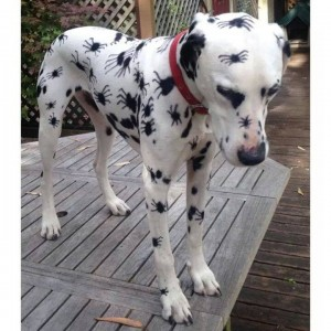 Dog ready for Halloween