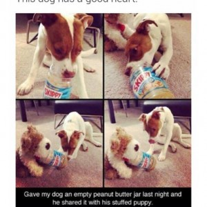 Dog with a good heart