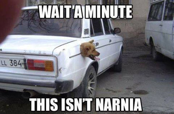 Is this Narnia?