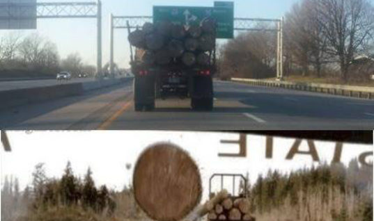 Log Trucks in front