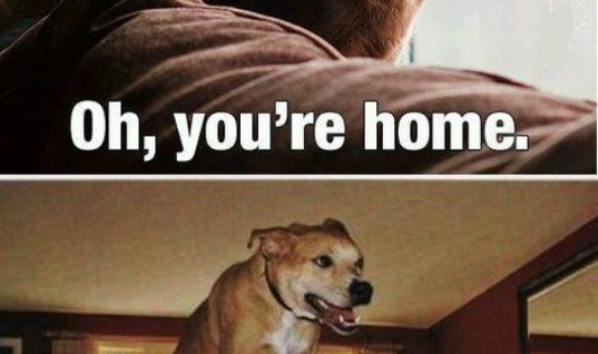 Reaction to your coming home