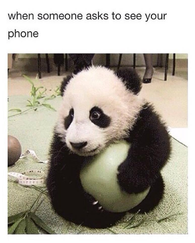 panda quotes funny