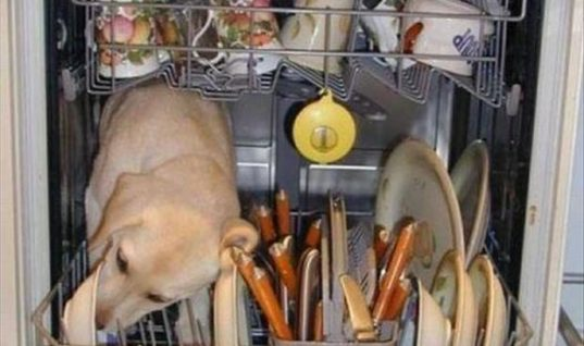 DISHWASHER SECRET – LOL
