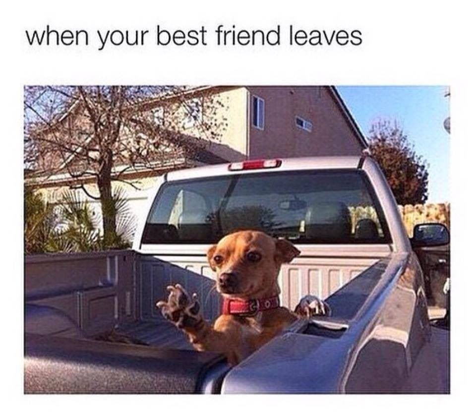 When best friend leaves funny pictures quotes memes funny images funny jokes funny photos