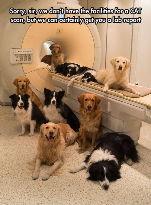 CAT Scan cat scan funny pictures, quotes, memes, funny images, funny