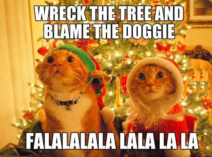 Funny Christmas Cat Meme : Cat wrecks christmas tree funny pictures quotes memes