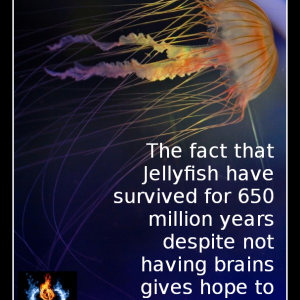 Jellyfish Fact