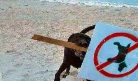 No Dogs on Beach