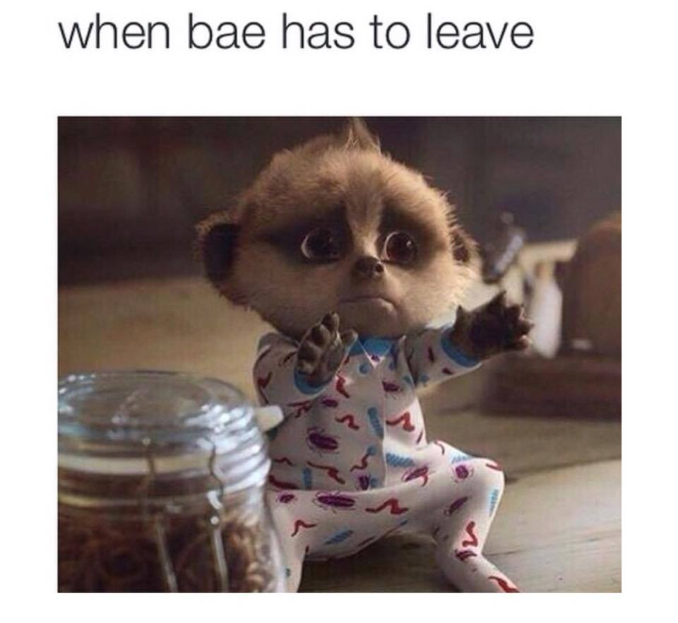 when bae has to leave funny pictures quotes memes funny images funny jokes funny photos