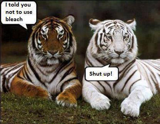 Tiger Quotes Extraordinary Bleach Tiger Funny Pictures Quotes Memes Funny Images Funny