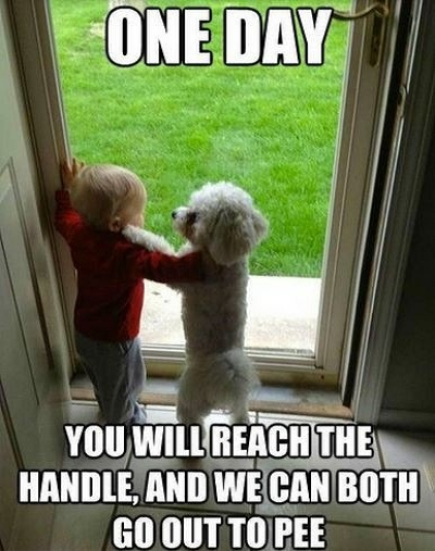 You Funny Kid Meme : Dog and kid