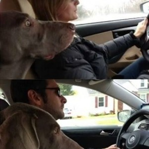 Dog Decides on Driving!