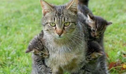 Mother Cat