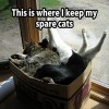 Box With Cats